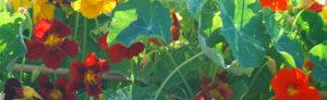 cuisine-hildegardienne-jardin-gite