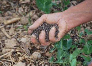 hildegarde-gastronomie-conseil-jardinage-permaculture