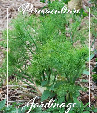 permaculture-hildegarde-jardinage