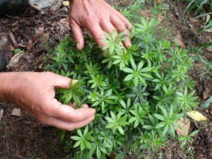 plantes-jardinage-hildegarde-bingen