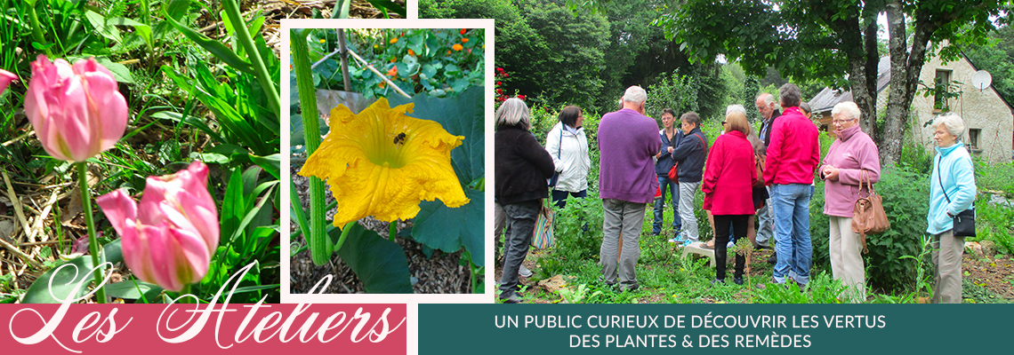 remedes-permaculture-plante-vertues-cuisine-morbihan-bretagne