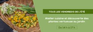 Atelier cuisine découverte des plantes vertueuses