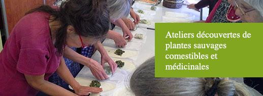 ateliers-decouvertes-de-plantes-sauvages-comestibles-et-medicinales